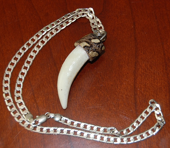 Gator tooth necklace